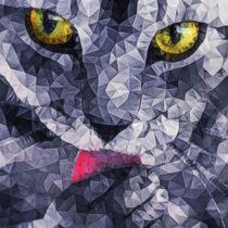 cat eyes von ancello