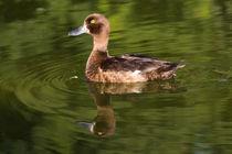 schöne Ente auf dem See von Karsten Bergmann