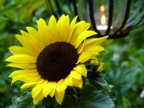 Sonnenblume - 2 von maja-310