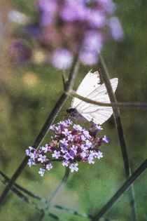 Schmetterling an Blüte von Petra Dreiling-Schewe