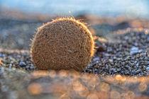 palla di mare - Seaball - Seeball - Meeresball von Peter Bergmann