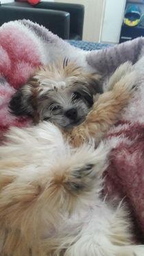 Little pet by Anny Caroline  Martins