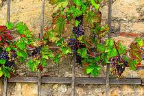 Weintrauben by mario-s