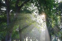 Morgensonne und Bäume von Bernhard Kaiser