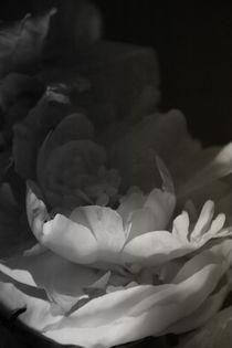 flower by ealin