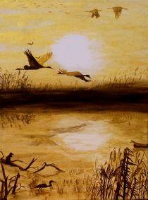 Vogelbeobachtung im Sonnenuntergang by terra-de-arte
