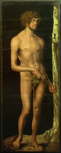 L.Cranach d.Ä., Adam by AKG  Images