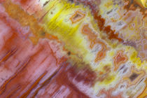 Petrified Wood close-up von Danita Delimont