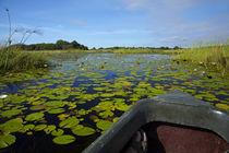 Mokoro in Okavango Delta, Botswana, Africa by Danita Delimont