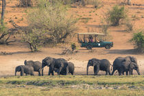 Chobe National Park. Watching elephants from a safari vehicl... by Danita Delimont