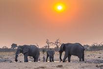 Chobe National Park. Savuti. Harvey's Pan. Elephants drinkin... von Danita Delimont