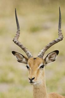Botswana, Africa von Danita Delimont