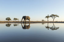 African Elephant at Water Hole, Chobe National Park, Botswana von Danita Delimont