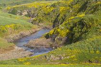 Africa, Ethiopia, Ethiopian Highlands, Western Amhara, meskel flowers by Danita Delimont