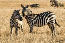 Africa, Kenya, Chyulu Hills, Old Donyo Wuas Lodge, Mbirikani... von Danita Delimont