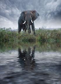 Africa, Kenya, Masai Mara Game Reserve von Danita Delimont