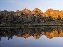 The Mount Kenya NP in Kenya by Danita Delimont