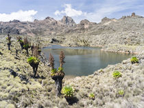 The Mount Kenya NP in Kenya von Danita Delimont