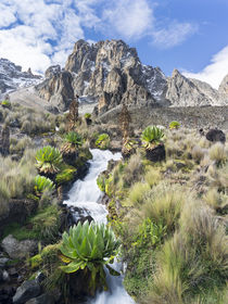 The Mount Kenya NP in Kenya by Danita Delimont