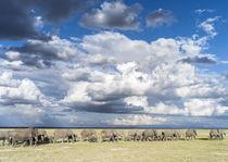 African bush elephant Kenya by Danita Delimont