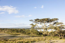 Lake Naivasha and Crescent Island, Kenya by Danita Delimont