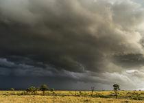 landscape in the Maasai Mara, Kenya von Danita Delimont