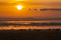 landscape in the Maasai Mara, Kenya by Danita Delimont