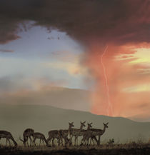 Impala and Lighting, Kenya, Africa by Danita Delimont
