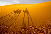 North Africa, Tafilalet, Erfoud, Merzouga, Erg Chebbi, late ... by Danita Delimont