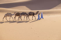Morocco, Erg Chegaga is a Saharan sand dune, it is the large... by Danita Delimont