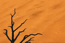 Africa, Namibia, Namib-Naukluft Park, Dead Vlei von Danita Delimont