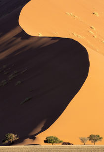 Africa, Namibia, Namib-Naukluft Park by Danita Delimont