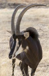 Africa, Namibia, Windhoek, Okapuka Ranch by Danita Delimont