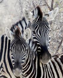 Africa, Namibia, Etosha National Park by Danita Delimont