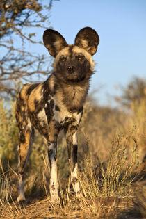 Africa, Namibia von Danita Delimont