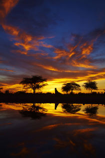Sunrise, Okaukuejo Rest Camp, Etosha National Park, Namibia, Africa. by Danita Delimont