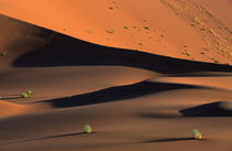 Grass on sand dunes, Sossusvlei, Namib Desert, Namib-Naukluf... by Danita Delimont