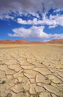 A cracked desert plain that once had water, flowers and gras... von Danita Delimont