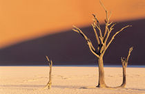 A dead tree against a backdrop of a red dune. von Danita Delimont