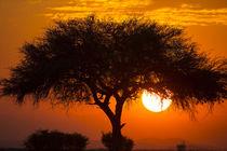 Etosha National Park, West Entrance, Namibia, Africa von Danita Delimont