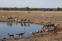 Etosha Watering Hole von Danita Delimont