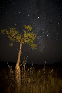 Phantom tree with nighttime stars and the Milky Way, Sesriem, Namibia. von Danita Delimont