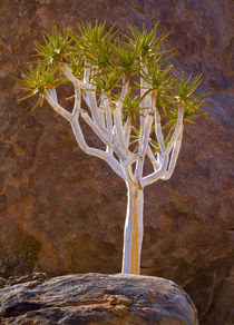 Africa, South Africa, Richtersveld National Park by Danita Delimont