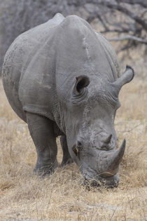 Africa, South Africa, Londolozi Private Game Reserve von Danita Delimont