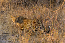 Africa, South Africa, Ngala Private Game Reserve by Danita Delimont