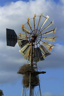 Windmill and nest, Kruger National Park, South Africa by Danita Delimont