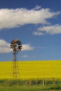 Canola field, near Bredarsdorp, Western Cape, South Africa. by Danita Delimont