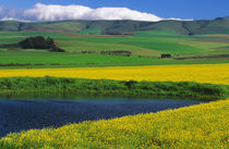 Dam and canola fields, Riviersonderend, Overberg District Mu... by Danita Delimont