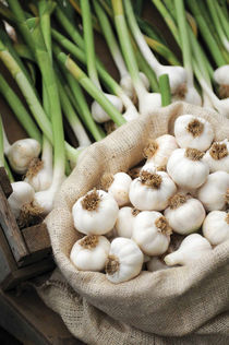 A Bag filled with Fresh Garlic von Danita Delimont