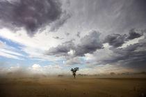 A dust storm, Kgalagadi Transfrontier Park, Northern Cape, S... by Danita Delimont